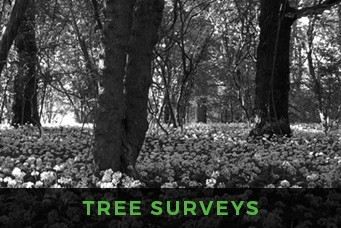 Focus Ecology - Tree surveys